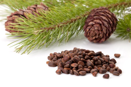 siberian pine: Siberian pine nuts and needles branch on white background