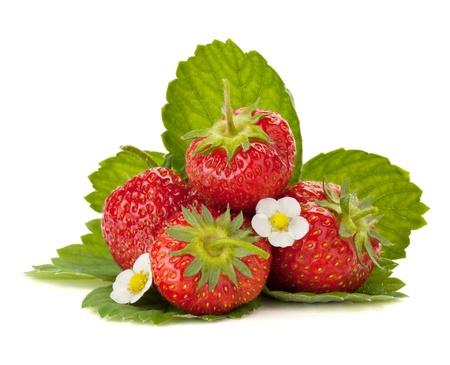 Aardbei vruchten met bloemen en groene bladeren. Geïsoleerd op witte achtergrond Stockfoto