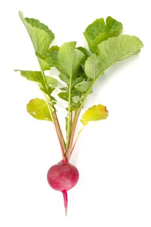 Fresh radish. Isolated on white background photo