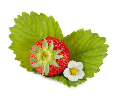 Strawberry fruit with flower and green leaves. Isolated on white background photo
