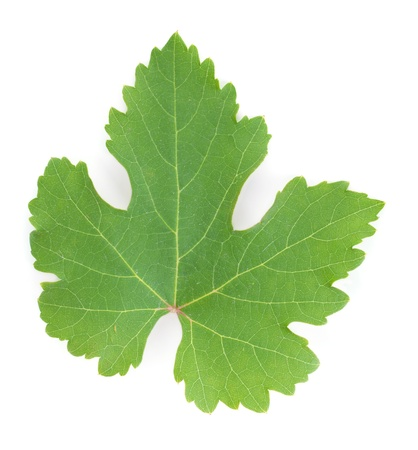 grape leaf: Grapes leaf. Isolated on white background Stock Photo