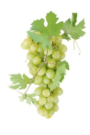 wei�e trauben: Wei�e Rebsorten mit Bl�ttern. Isoliert auf wei�em Hintergrund