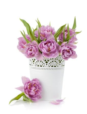 금속 화분에 핑크 튤립입니다. 흰색 배경에 고립