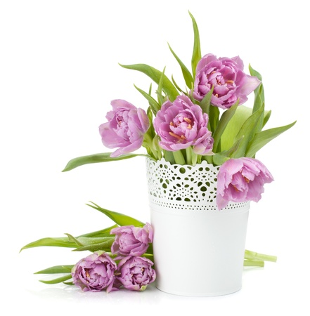 fresh pot: Pink tulips in metal flowerpot. Isolated on white background