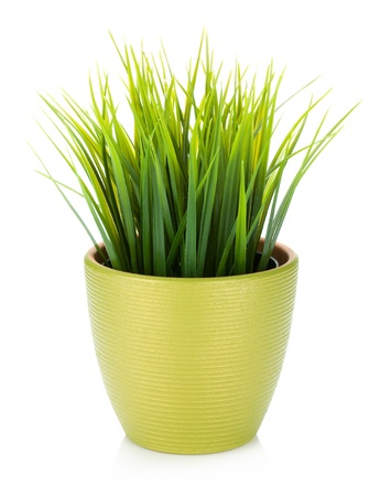 plant pot: Decorative grass in flowerpot. Isolated on white background