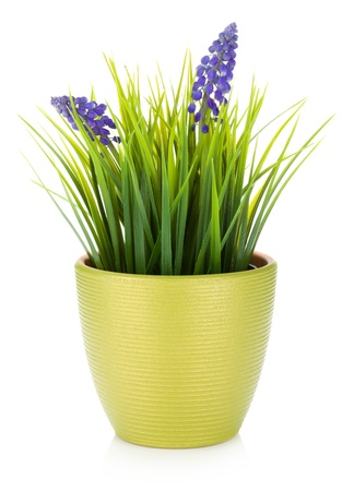 Decorative flower in flowerpot  Isolated on white background photo