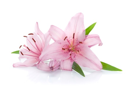 Two pink lily. Isolated on white background Stock Photo - 14295635