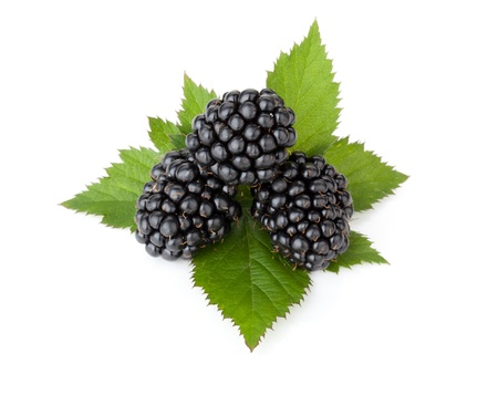 bramble: Three ripe blackberry with leaves. Isolated on a white background