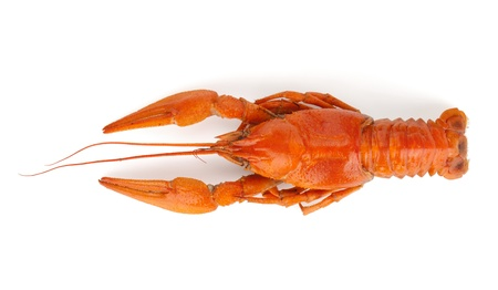 Boiled crawfish. Isolated on a white background Stock Photo - 14823301