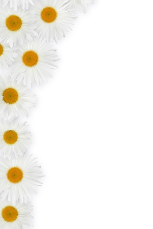 Chamomile flower decor. Over white background photo