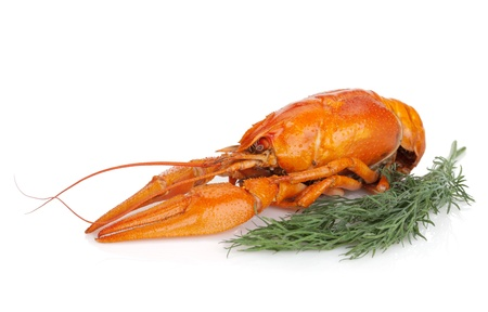 Boiled crayfishes with dill. Isolated on a white background photo