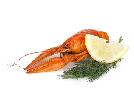 Boiled crayfish with lemon slice and dill. Isolated on a white background Stock Photo - 15605480