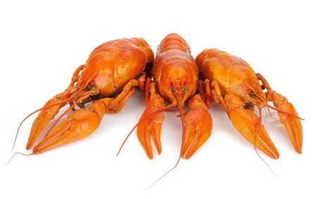 Three boiled crayfishes. Isolated on a white background Stock Photo - 15788086
