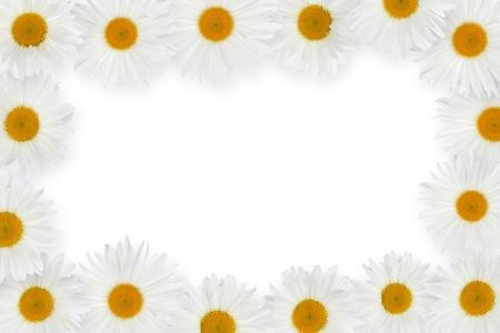 Chamomile flower frame. Over white background photo