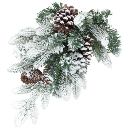 fir cones: Fir tree branch with cones covered with snow. Isolated on white background