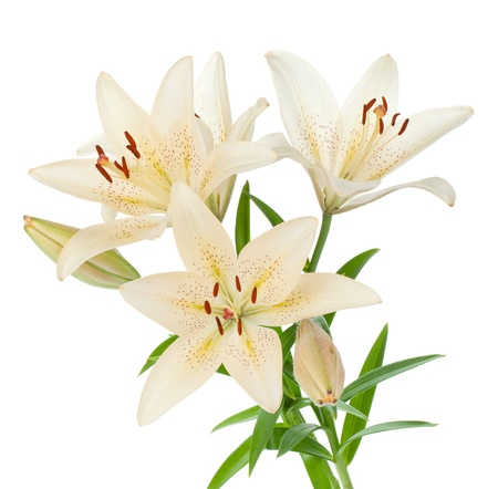 lilly: White lily bouquet. Isolated on white background Stock Photo