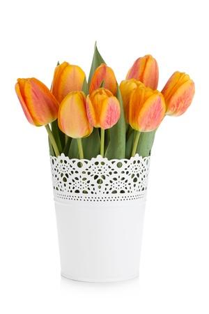 flowerpots: Orange tulips in flowerpot. Isolated on white background