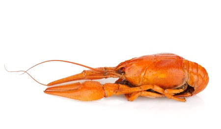 Boiled crayfish. Isolated on a white background photo