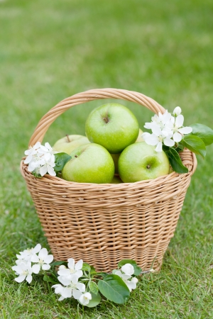 Ripe green apples in basket on green grass photo