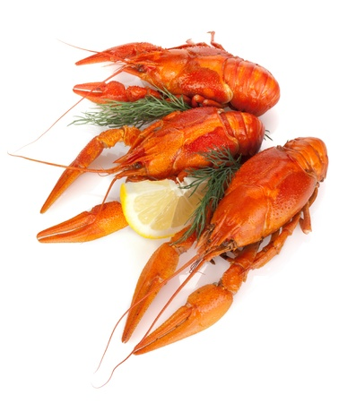 Boiled crayfishes with lemon slice and dill. Isolated on a white background photo