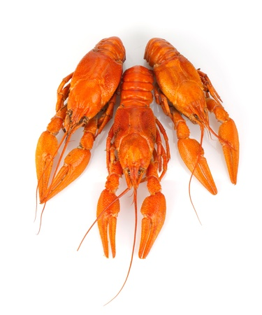 Three boiled crayfishes. Isolated on a white background Stock Photo - 20836236