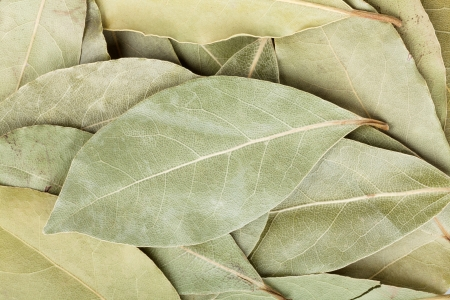 dried leaf: Aromatic bay leaves food texture background
