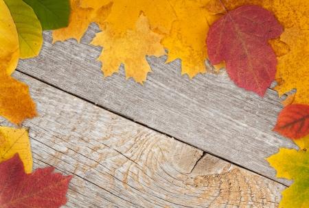 Autumn leaves on wood texture background photo