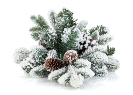 fir cones: Fir tree branch with cones covered with snow.  Stock Photo