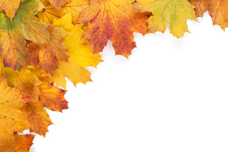 Colorful autumn maple leaves frame. Isolated on white background photo