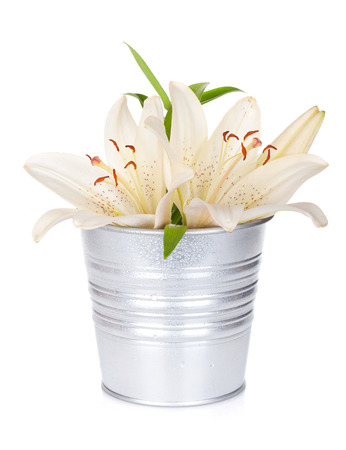 White lily flowers in bucket. Isolated on white background photo