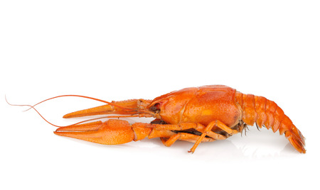 Boiled crayfish. Isolated on a white background