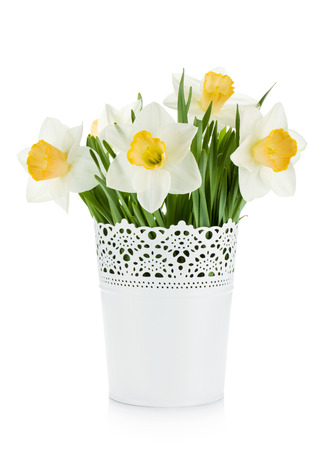 Bouquet of white daffodils in flowerpot. Isolated on white background photo
