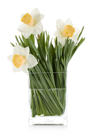 White daffodils in glass vase. Isolated on white background photo