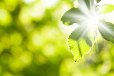 Abstract summer bokeh background with green leaves Stock Photo