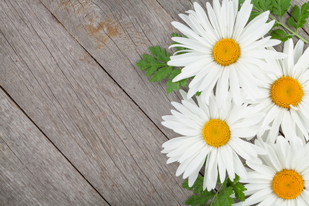 Daisy camomile flowers on wooden table background with copy space photo