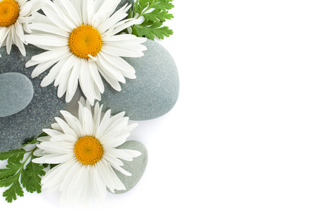 day spa: Daisy camomile flower and sea stones. Isolated on white background Stock Photo