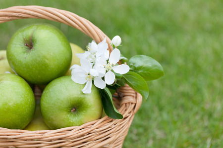 Ripe green apples with flowers in basket on green grass. Closeup photo