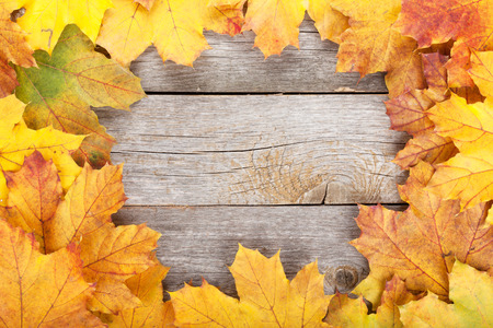 Colorful autumn maple leaves on wooden table photo