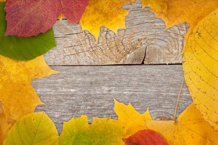 Autumn leaves on wood texture background photo