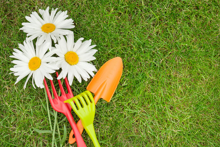 Garden tools and chamomile flowers over green grass with copy space photo