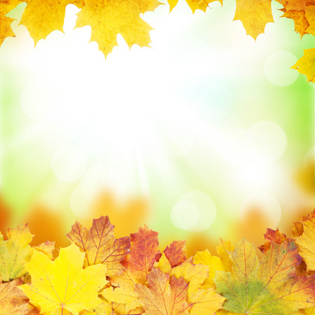 Autumn background with maple leaves and sunny bokeh photo