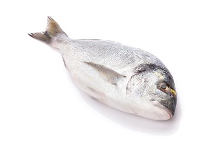 gilthead: Fresh dorado fish. Isolated on white background