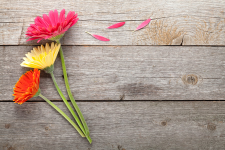 jardines con flores: Tres flores de gerbera coloridos en mesa de madera con espacio de copia