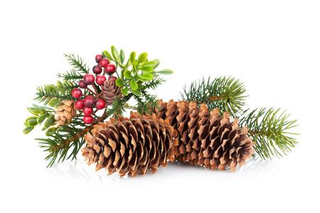 ホリーの装飾クリスマス ツリー ブランチ。白い背景に分離