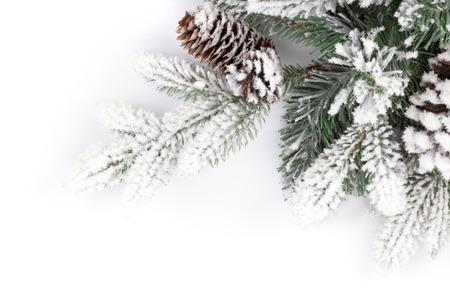 전나무 트리 분기는 눈으로 덮여있다. 흰색 배경에 고립