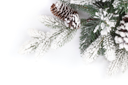 Fir tree branch covered with snow. Isolated on white background photo
