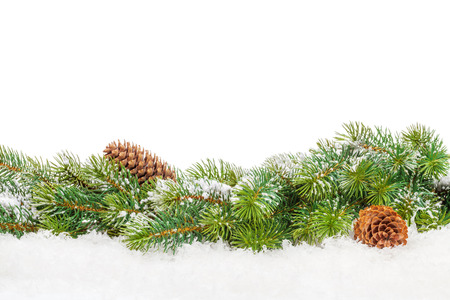 snow and trees: Christmas fir tree with snow. Isolated on white background with copy space