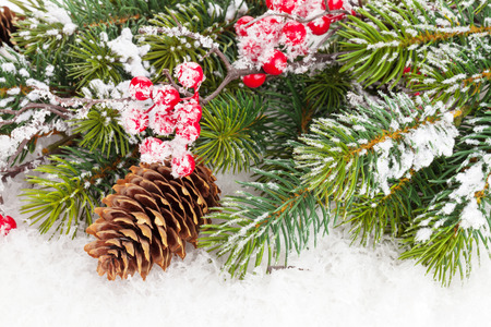 fir cones: Christmas fir tree branch with holly berry over snow Stock Photo