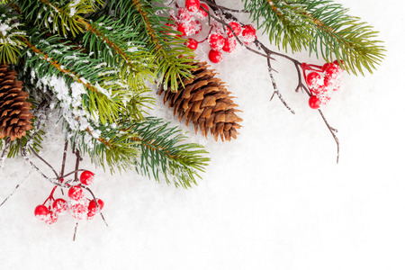 pinecone: Christmas fir tree branch with holly berry over snow Stock Photo