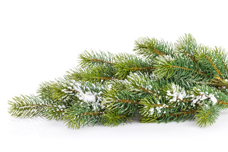 Christmas fir tree snow branch. Isolated on white background Stock Photo